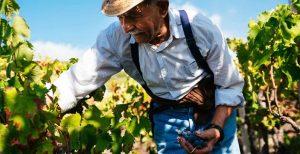 Wine Artisans Tannico